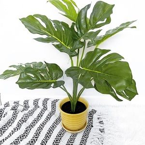 UO Monstera Cheese Leaf Plant In Pot